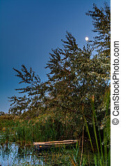 Old boat on the water among the trees and reeds in the summer. Beautiful view of colorful and peaceful evening.