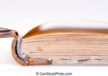 old book pages close-up