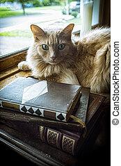 Old Books Cat