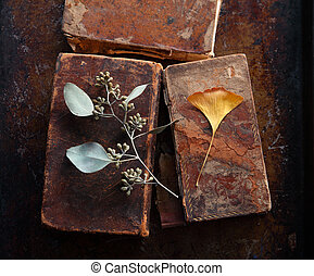 Old books with ginkgo and eucalyptus leaves