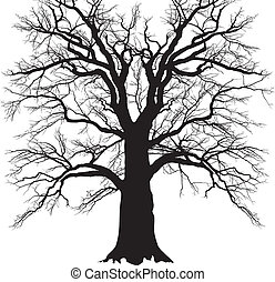 Old branched tree - black and white illustration of a ...
