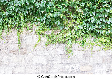 Old Brick Wall Covered by Green Plant