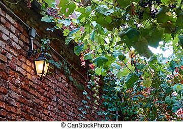 old brick wall lantern and branches of vine with grapes
