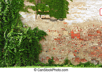 Old brick wall with green leaves