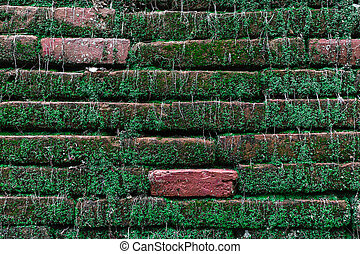Old brick wall with green moss
