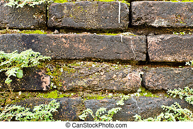 old brick wall with plant