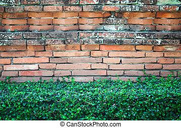 Old Brick Wall with Shrub