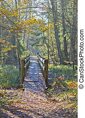 old bridge in the forest
