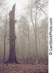 Old broken tree in autumn day