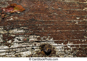 Old brown wood background with rusty nail