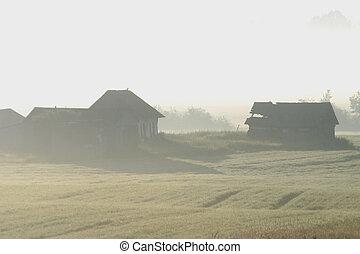 buildings in the fog