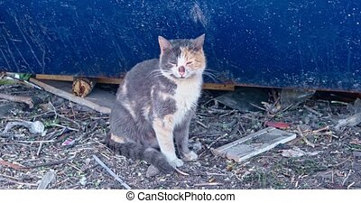 Senior calico cat sitting on littered ground near blue dumpster