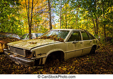 Old car and autumn color in a junkyard.