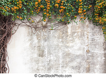 Old cement wall with green vines and flower in garden, Fuzhou, Fujian, China