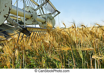 Old combine harvester stopped in barley field - Old combine...