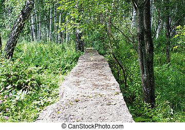 Old concrete blocks in a summer forest