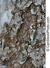 Old Cracked Tree Bark Texture