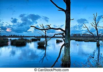 old dead trees in bog during dusk, Dwingelderveld, Drenthe,...