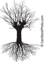 Old deciduous tree with the roots