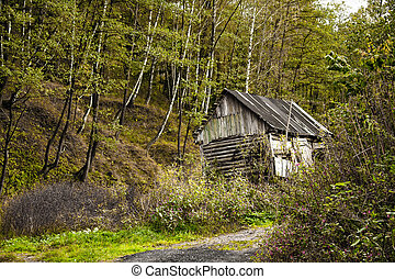 old deserted house in the forest