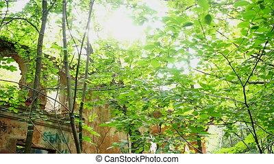 Old destroyed building in forest - Old destroyed building in...