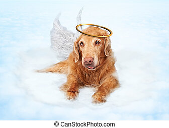 Old Dog Angel on Cloud in Heaven