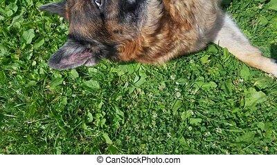 Old dog having fun outdoors