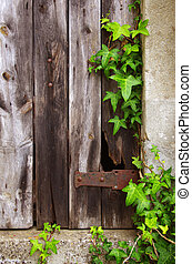 Old Door and Foliage