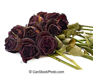 Old dried red roses against a white background
