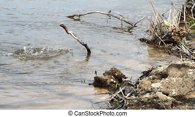 Old drift wood tree lying in the rippling water