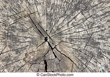Old dry log texture as background