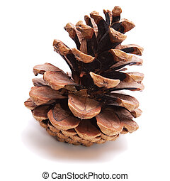 Old Dry Pinecone isolated on the white