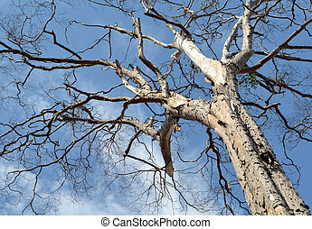 old dry tree on a cloudy sky