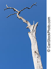 old dry tree on the blue sky background