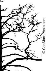 old dry tree