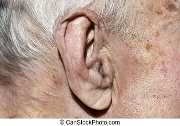 old  ear in macro - old  ear