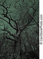 Old eerie tree - A big, old, eerie tree in a dark spooky and...