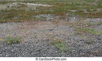 Old Faithful Geyser in Yellowstone - Old Faithful Geyser in...