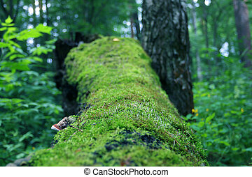 Old fallen tree covered with moss among grass in summer forest