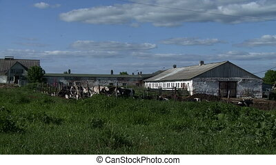 Old farm and green meadow