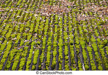 old farm barn roof with green moss background