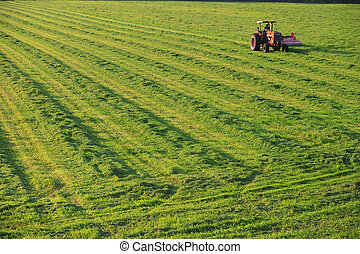 Old farm tractor in a field.