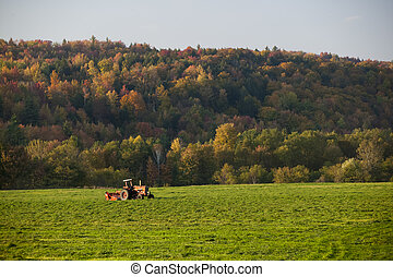 Old farm tractor in a field. - Old farm tractor in a mowed...