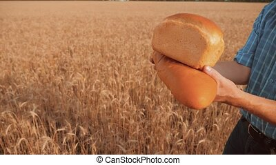 old farmer man baker holds a golden bread and loaf in wheat field lifestyle against the blue sky. slow motion video. successful agriculturist in field of wheat. harvest time. baker bread baking vintage agriculture concept