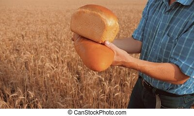 old farmer man baker holds a golden bread and loaf in wheat lifestyle field against the blue sky. slow motion video. successful agriculturist in field of wheat. harvest time. baker bread baking vintage agriculture concept