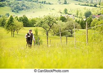 Old farmer on the meadow
