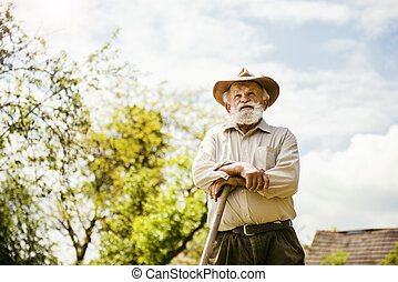 Old farmer on the meadow - Old farmer with a hoe is having...