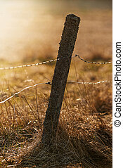 Old fence pole with barbed and electrical wire for livestock during sunset over a pasture