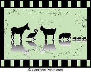 old film strip with farm animals