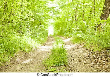 Old forest road in wild nature